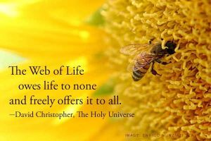 web of life owes life to none
